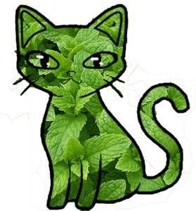 Mint Cat